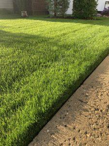 enrich soil enhancer